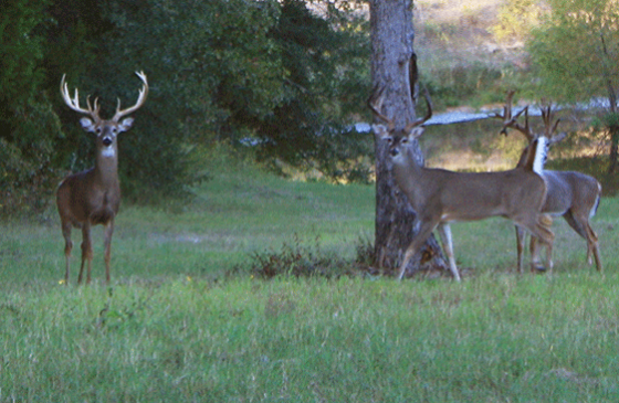 Hidden Hills Ranch - Trophy Whitetail